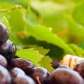 Grape and leaves macro blurred wine background Royalty Free Stock Photography