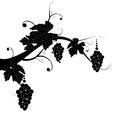 Grape silhouette for you design Royalty Free Stock Photo