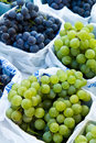 Grape Variety Stock Photography