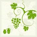 Grape vine background.