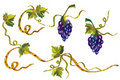 Grape vine design elements Stock Images