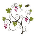Grape vine with flying bird. Royalty Free Stock Images