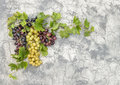 Grape vine with green leaves concrete stone background Royalty Free Stock Photo