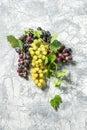Grape vine green leaves concrete stone texture Autumn background Royalty Free Stock Photo