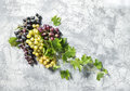 Grape vine green leaves concrete stone texture Food background Royalty Free Stock Photo