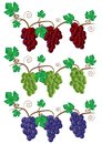 Grape and Vine illustration Royalty Free Stock Image