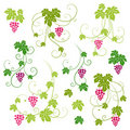 Grape vines set. Royalty Free Stock Photos