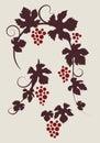 Grape vines silhouettes set. Royalty Free Stock Photo