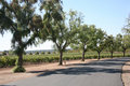 Grape vineyard driveway Royalty Free Stock Image