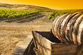 Grape Vineyard with Old Barrel Carriage Wagon Royalty Free Stock Photo