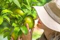 image photo : Grapefruit Scent
