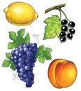 grapes apricot lemon black currant wine vine Royalty Free Stock Photo