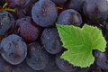 Grapes background dark with green leaf in close up Stock Images