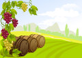 Grapes barrels and rural landscape illustration Royalty Free Stock Images