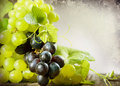 Grapes border design Royalty Free Stock Images