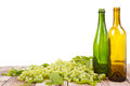 Grapes and bottles on wooden plank vine with leaves with empty wine sitting with an isolated white background Royalty Free Stock Photography