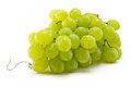 Grapes brush juicy ripe on a white background Stock Images