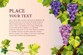 Grapes bunches abstract background with and with place for your text Royalty Free Stock Photo