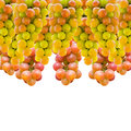 Grapes a grape is a non climacteric fruit specifically a berry and from the deciduous woody vines of the genus vitis Stock Image