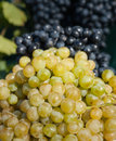 Grapes illuminated bright sunlight Stock Image