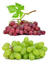 Grapes isolated on white background Stock Photos
