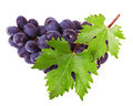 Grapes isolated on white background Royalty Free Stock Images