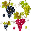 Grapes with leaves Royalty Free Stock Photo