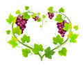 Grapes with leaves in the form of heart Stock Image