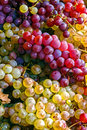 Grapes pile of grape yellow and pink gathered at the harvest Royalty Free Stock Images