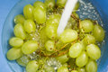 Grapes washed in water Royalty Free Stock Photography
