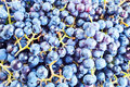 Grapes for wine manufacturing. Royalty Free Stock Photos