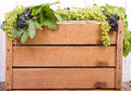 Grapes on wooden crate vine antique room for copy space Stock Photos