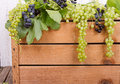 Grapes on wooden crate vine antique room for copy space Stock Images