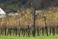 Grapevine field in liechtenstein europe Stock Photography