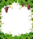 Telaio uva