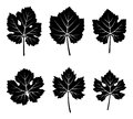 Grapevine leaves collection of isolated on white background Royalty Free Stock Photos