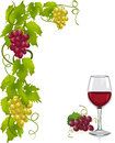 Grapevine and wine glass vector illustration Royalty Free Stock Image