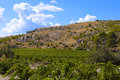 Grapevines in dry regions of southern france a region at the foot rocky hills the south Stock Images