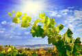 Grapevines mountains and blue sky grape branch against the sun on a dark in Royalty Free Stock Photos