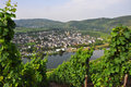Grapevines near mosel river, germany Stock Images
