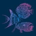 Graphic Aquarium Fishes Set