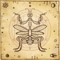 Graphic decorative image of the Mantis. Alchemical circle of transformations. Esoteric, Mysticism, Sorcery.