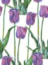 Graphic flowers blue tulip on a white background. Floral seamless pattern. Royalty Free Stock Photo