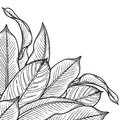 Graphic heliconia leaves