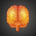 Graphic illustration of Brain Stock Photography