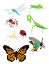 Graphic Images of Bugs Spiders Butterflies Royalty Free Stock Photos
