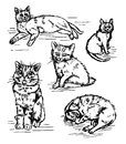 Graphic line Illustration of cats on a white background