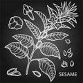 Graphic sesame flowers