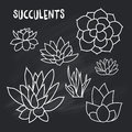 Graphic Set of succulents on chalk board for design of cards, invitations
