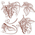Graphic vector set bunch of grapes and vine elements